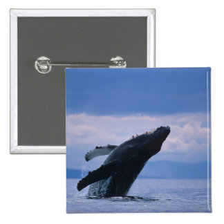 USA, Alaska, Tongass National Forest, Humpback 2 Inch Square Button