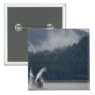 USA, Alaska, Tongass National Forest, Humpback 3 2 Inch Square Button