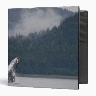 USA, Alaska, Tongass National Forest, Humpback 3 Binder