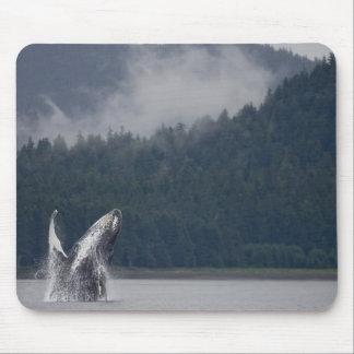USA, Alaska, Tongass National Forest, Humpback 3 Mouse Pad