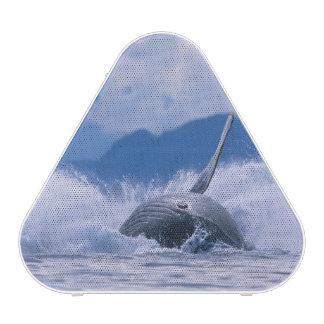 USA, Alaska, Tongass National Forest, Humpback 4 Speaker