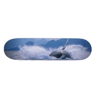 USA, Alaska, Tongass National Forest, Humpback 4 Skateboard Decks