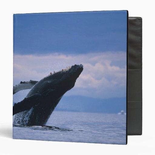 USA, Alaska, Tongass National Forest, Humpback Vinyl Binders