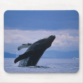 USA, Alaska, Tongass National Forest, Humpback Mouse Pad