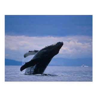 USA, Alaska, Tongass National Forest, Humpback Postcard