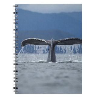 USA, Alaska, Tongass National Forest, Humpback Spiral Note Books