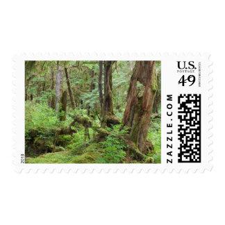 USA, Alaska. Verdant Rainforest In Springtime Postage