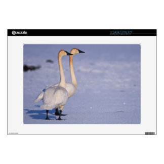 """USA, Alaska, whistling swan adults, central Decals For 15"""" Laptops"""
