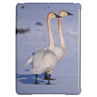 USA, Alaska, whistling swan adults, central iPad Air Covers