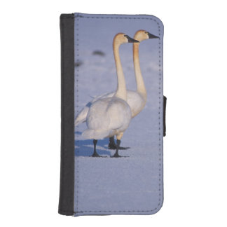 USA, Alaska, whistling swan adults, central Phone Wallets