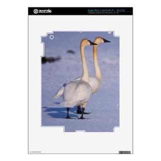 USA Alaska whistling swan adults central Skins For iPad 3