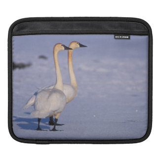 USA, Alaska, whistling swan adults, central Sleeve For iPads