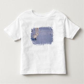 USA, Alaska, whistling swan adults, central T-shirt