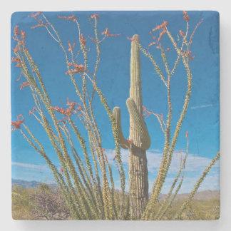 USA, Arizona. Cactus In Saguaro National Park Stone Coaster