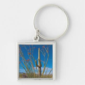 USA, Arizona. Cactus In Saguaro National Park Keychain