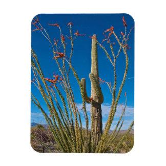 USA, Arizona. Cactus In Saguaro National Park Rectangular Magnets