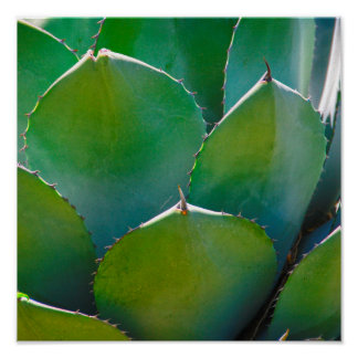 USA, Arizona. Close-Up Of Succulent Plant Poster