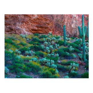 USA, Arizona. Desert Flora Postcard