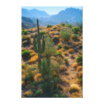 USA, Arizona. Desert View Canvas Print