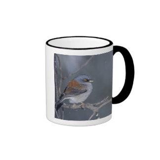 USA, Arizona, Madera Canyon. Yellow-eyed junco Ringer Mug