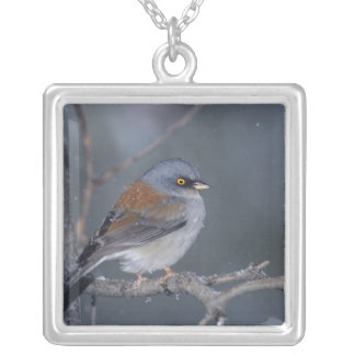 USA, Arizona, Madera Canyon. Yellow-eyed junco Silver Plated Necklace