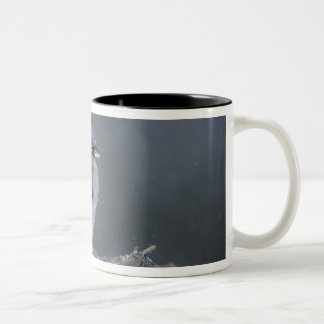 USA, Arizona, Madera Canyon. Yellow-eyed junco Two-Tone Coffee Mug