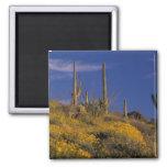USA, Arizona, Organ Pipe Cactus National 2 2 Inch Square Magnet