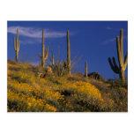 USA, Arizona, Organ Pipe Cactus National 2 Postcard