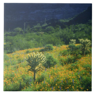 USA, Arizona, Organ Pipe Cactus National Ceramic Tile
