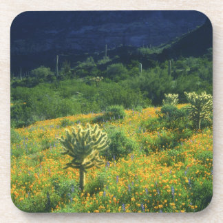 USA, Arizona, Organ Pipe Cactus National Drink Coaster