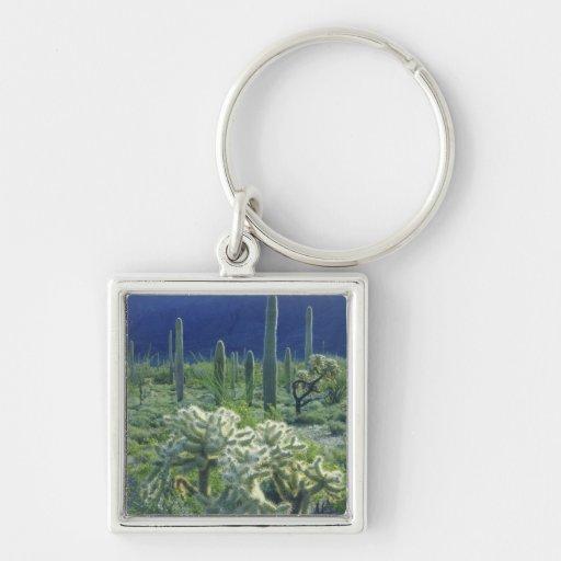 USA, Arizona, Organ Pipe Cactus National Silver-Colored Square Keychain
