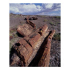 USA, Arizona, Petrified Forest National Park, 2 Poster
