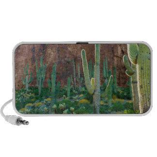 USA, Arizona. Saguaro Cactus Field By A Cliff Speaker