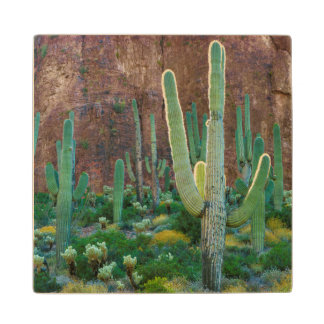 USA, Arizona. Saguaro Cactus Field By A Cliff Wooden Coaster