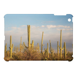USA, Arizona, Saguaro National Park, Saguaro iPad Mini Cover