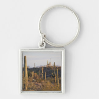 USA, Arizona, Sonoran Desert, Ajo, Ajo 2 Key Chain