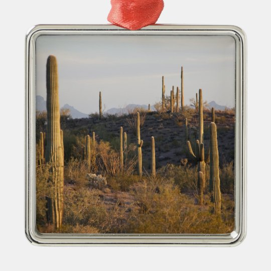 USA, Arizona, Sonoran Desert, Ajo, Ajo 2 Metal Ornament