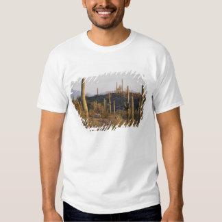 USA, Arizona, Sonoran Desert, Ajo, Ajo 2 T-Shirt