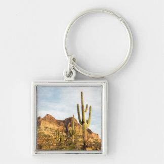 USA, Arizona, Tonto National Forest, Picketpost 2 Key Chain