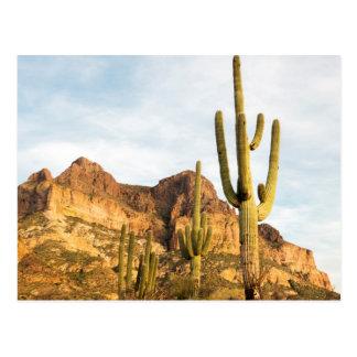 USA, Arizona, Tonto National Forest, Picketpost 2 Postcard