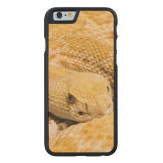 USA, Arizona, Tucson, Arizona-Sonora Desert 2 Carved Maple iPhone 6 Case