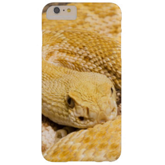 USA, Arizona, Tucson, Arizona-Sonora Desert 2 Barely There iPhone 6 Plus Case