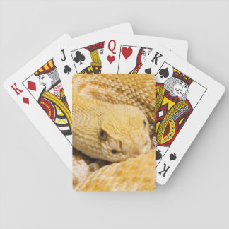 USA, Arizona, Tucson, Arizona-Sonora Desert 2 Playing Cards