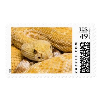 USA, Arizona, Tucson, Arizona-Sonora Desert 2 Postage Stamp