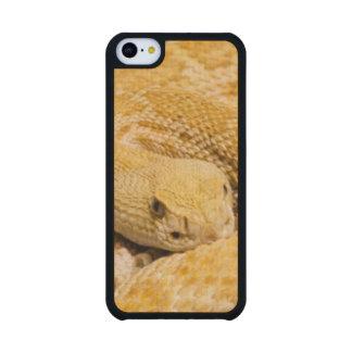 USA, Arizona, Tucson, Arizona-Sonora Desert 2 Carved® Maple iPhone 5C Case