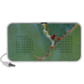 USA, Arizona, Tucson. Parryi Agave have sharp, Portable Speaker