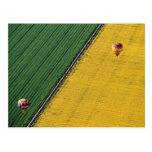 USA, Arizona, Val Vista. Hot-air balloons soar Postcard