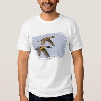 USA, Blaine, Washington. Male and female T-shirt