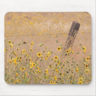 USA, California, Adin. Barbed-Wire Fence Mouse Pad