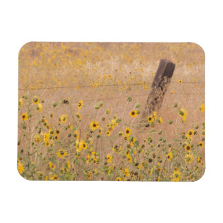 USA, California, Adin. Barbed-Wire Fence Rectangular Photo Magnet